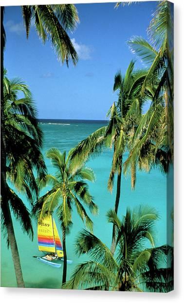 Catamarans Canvas Print - Usa, Hawaii Catamaran And Palms by Sunstar