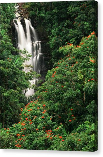 Tropical Rainforests Canvas Print - Usa, Hawaii Islands, View Of Nanue by Stuart Westmorland
