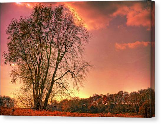 Indiana Autumn Canvas Print - Usa, Indiana Giant Tree In Prophetstown by Rona Schwarz