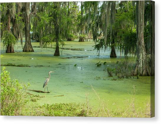 Great Cypress Canvas Print - Usa, Louisiana, Atchafalaya Basin, Lake by Jaynes Gallery