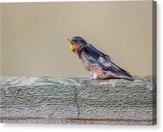 Swallows Canvas Print - Usa, Montana, Red Rock Lakes National by Elizabeth Boehm
