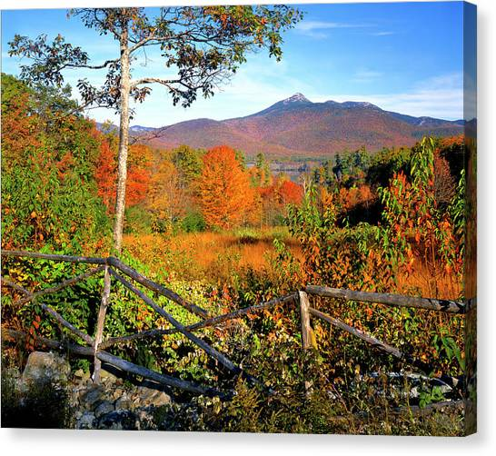 Birch Canvas Print - Usa, New England, New Hampshire by Jaynes Gallery