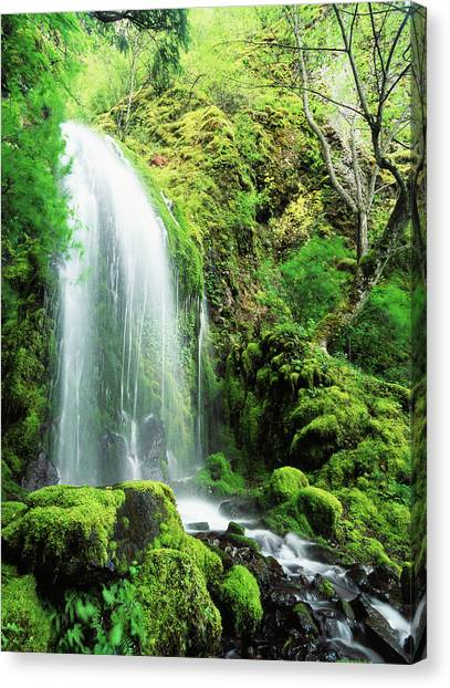 Colombian Canvas Print - Usa, Oregon, Colombia, Mt Hood National by Stuart Westmorland