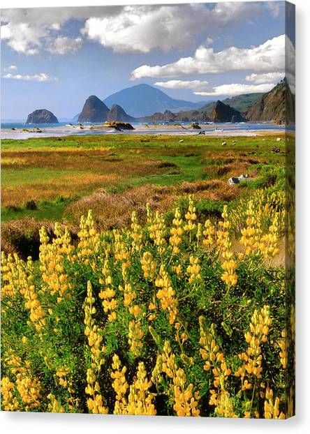 Beach Cliffs Canvas Print - Usa, Oregon, Ophir by Jaynes Gallery