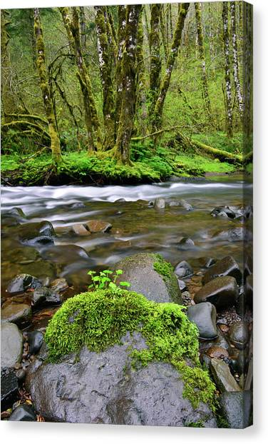 Wilson River Canvas Print - Usa, Oregon, Tillamook State Forest by Jaynes Gallery