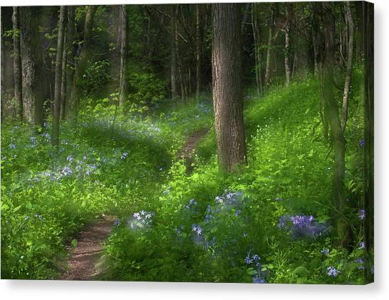 Phlox Canvas Print - Usa, Pennsylvania, Cedar Creek by Jaynes Gallery