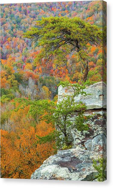 Buzzards Canvas Print - Usa, Tennessee, Fall Creek Falls State by Jaynes Gallery