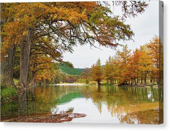 Usa, Texas, Cypress Tree With Golden Canvas Print by Westend61