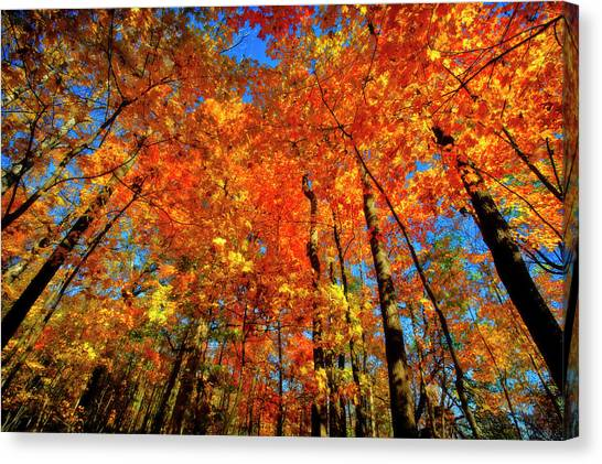 Indiana Autumn Canvas Print - Usa, West Lafayette, Indiana, Trees by Rona Schwarz