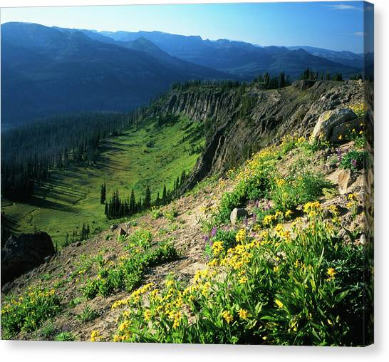 Teton National Forest Canvas Print - Usa, Wyoming, Wildflowers by Scott T. Smith