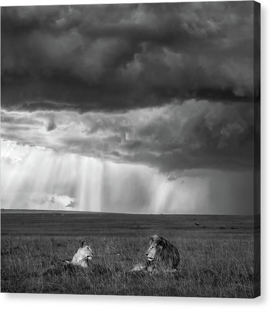 Kenyan Canvas Print - Valentine by John Fan