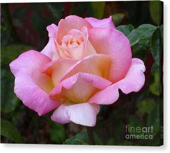 Valentine Pink Rose Canvas Print
