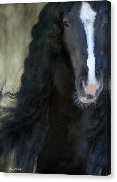 Gypsy Canvas Print - Valentino Dreams by Fran J Scott
