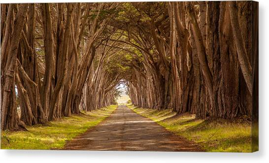 Valiant Trees Canvas Print