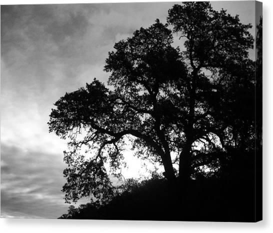 Valley Oak Canvas Print