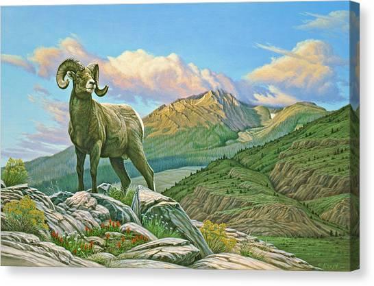 Vantage Point - Bighorn Canvas Print by Paul Krapf