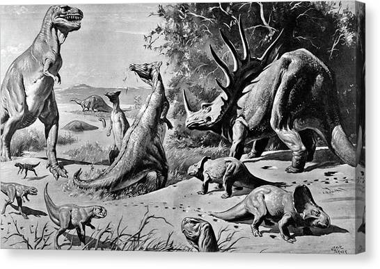 Gobi Canvas Print - Various Dinosaurs & Reptiles by Animal Images