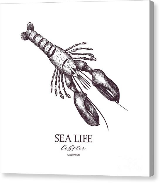 Engraving Canvas Print - Vector Sea Life Illustration. Hand by Geraria