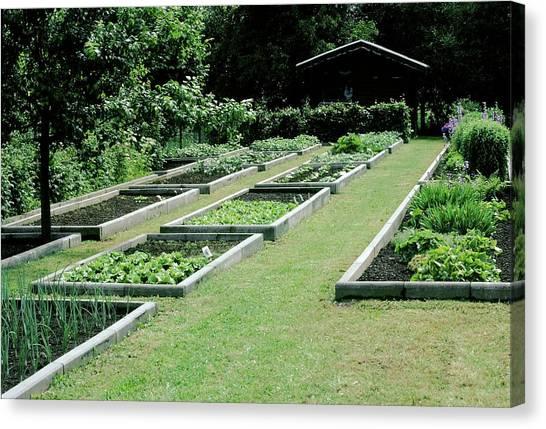 Vegetable Garden Canvas Print - Vegetable Garden 28. by A C Seinet/science Photo Library