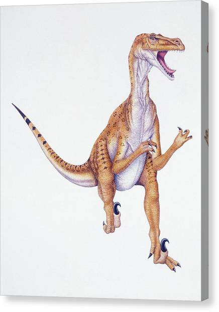 Velociraptor Canvas Print - Velociraptor by Deagostini/uig/science Photo Library