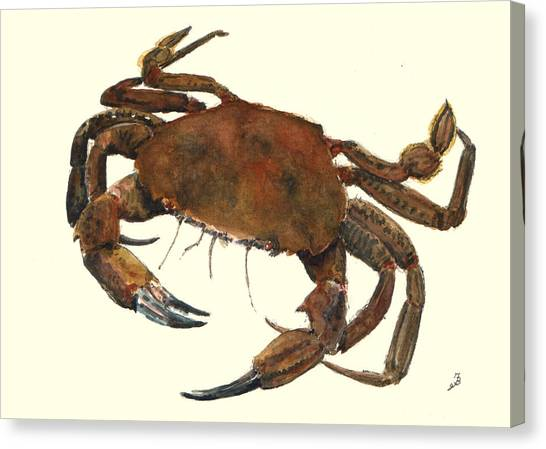 Crabs Canvas Print - Velvet Crab by Juan  Bosco