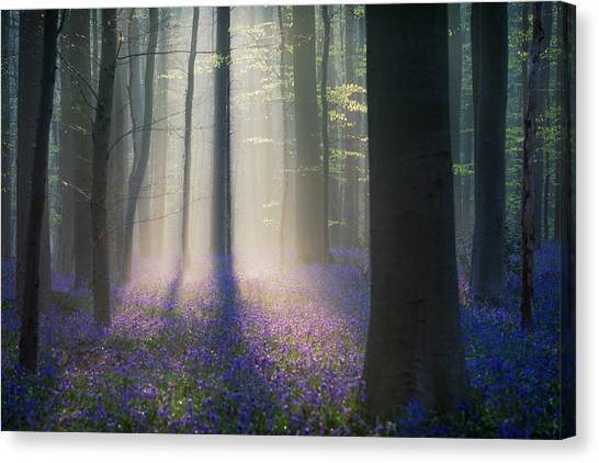 Foggy Forests Canvas Print - Velvet Light by Adrian Popan