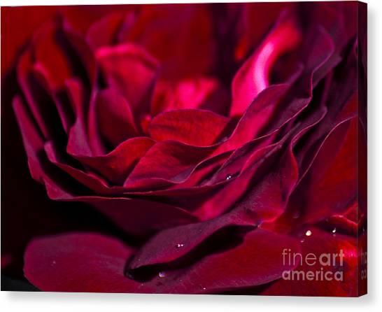 Passionate Canvas Print - Velvet Red Rose by Jan Bickerton