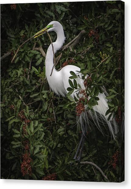 Venice Rookery Egret Canvas Print