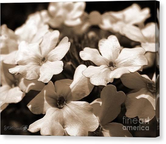 Canvas Print - Verbena Named White Hail by J McCombie