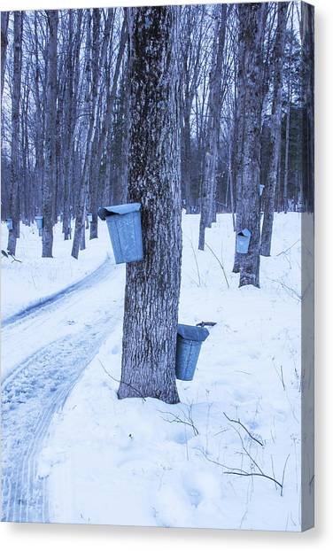 Vermont Maple Syrup Buckets Canvas Print
