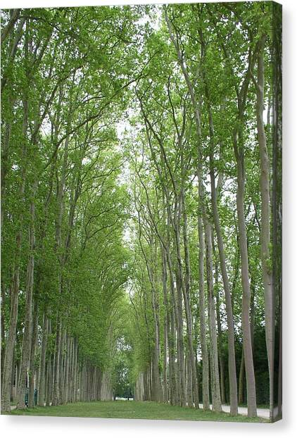Versailles Tree Garden 2005 Canvas Print