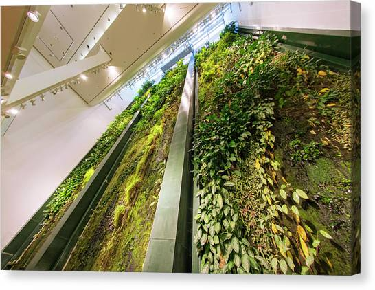 Installation Art Canvas Print - Vertical Garden by Louise Murray