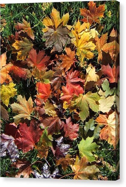 Vibrant Days Of Autumn Canvas Print by Margaret McDermott