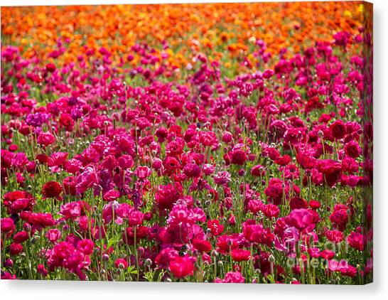 Vibrant Flower Field Canvas Print by Julia Hiebaum
