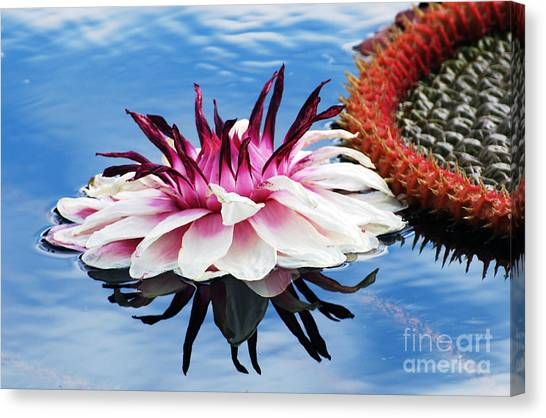 Victoria Amazonica Flower Canvas Print
