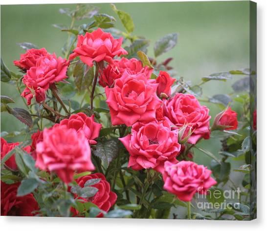 Victorian Garden Canvas Print - Victorian Rose Garden by Carol Groenen