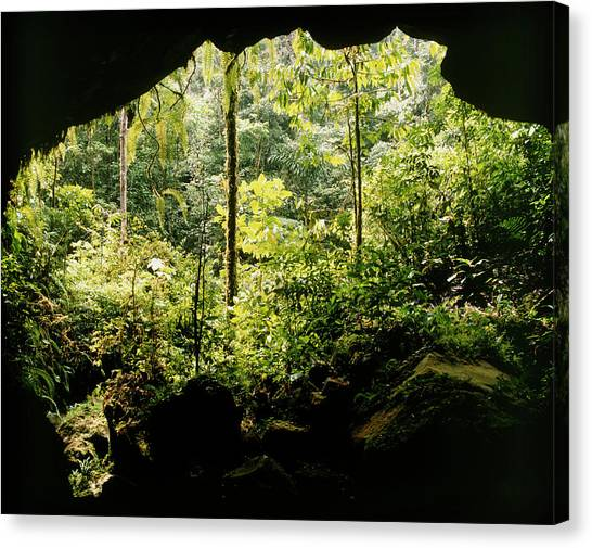 Mountain Caves Canvas Print - View From Cave Mouth Into Rainforest by Dr Morley Read/science Photo Library