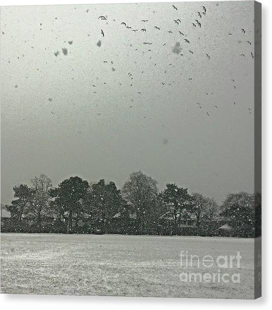 Snow Canvas Print - View From My Home Right Now.  Seagulls by Abbie Shores