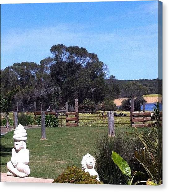 Kangaroo Canvas Print - View From Rustic Blue Cafe  by Andrew Coulson