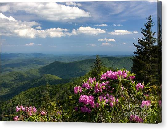 View From The Blue Ridge Parkway  Spring 2010 Canvas Print