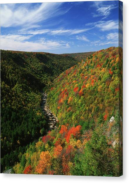 View Of Blackwater Canyon In Autumn Canvas Print