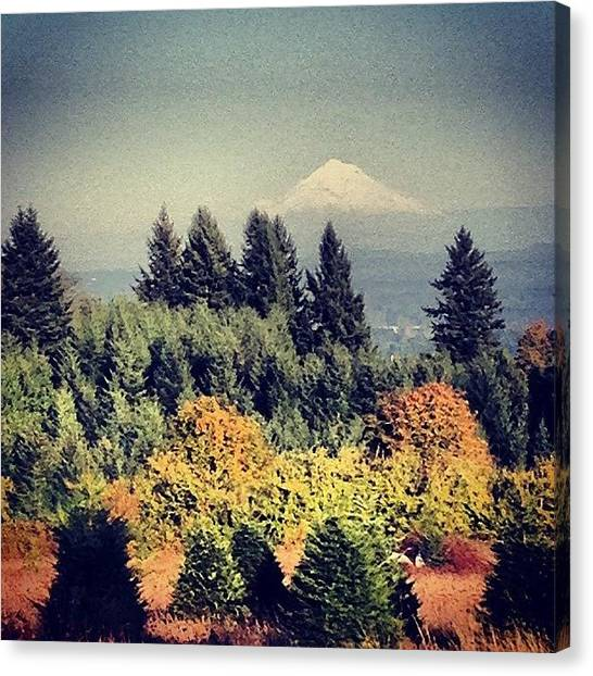 Rome Canvas Print - View Of #mthood From Ladd Hill On Fine by Rome Repcak