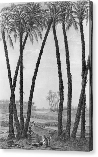 Archaeologists Canvas Print - View Of The Ruins Of Memphis Seen From The South East by Jean Louis Delignon