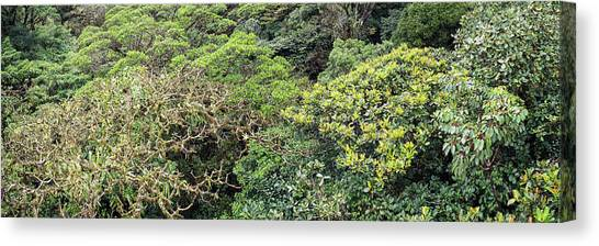 Monteverde Canvas Print - View Of Trees At Monte Verde Cloud by Panoramic Images