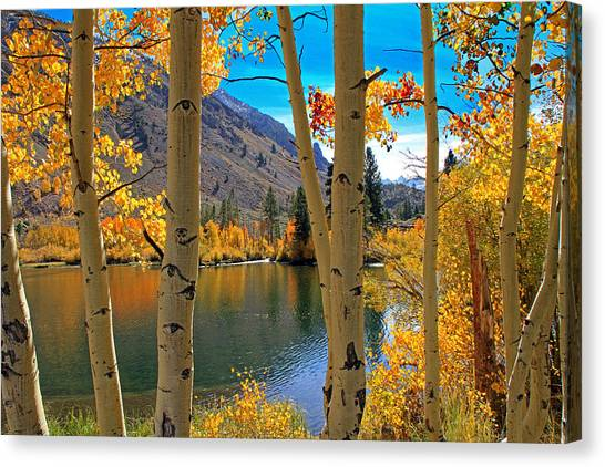 Water Falls Canvas Print - View Through The Aspens by Donna Kennedy