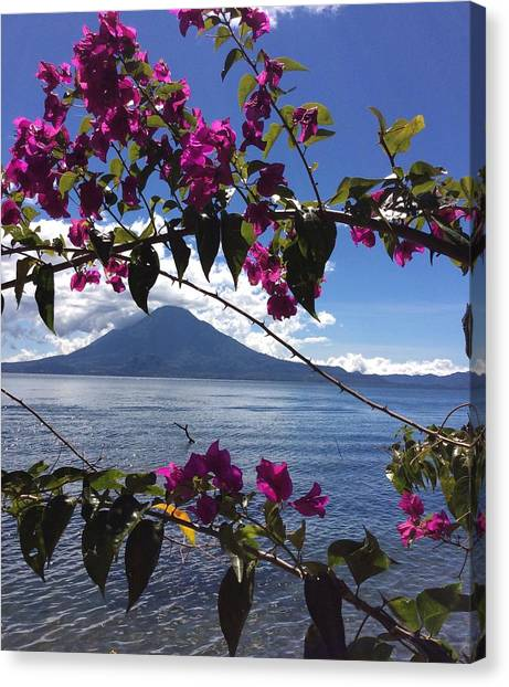 Volcanoes Canvas Print - Bougainvillea by Josias Tomas