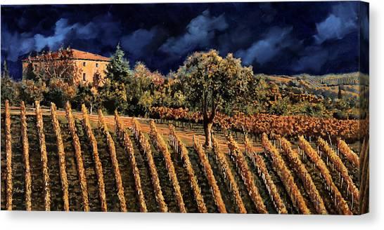 Grapes Canvas Print - Vigne Orizzontali by Guido Borelli