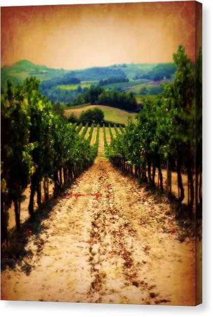 Vigneto Toscana Canvas Print