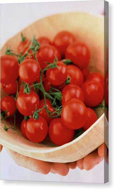 Vine Cherry Tomatoes Canvas Print by William Lingwood/science Photo Library