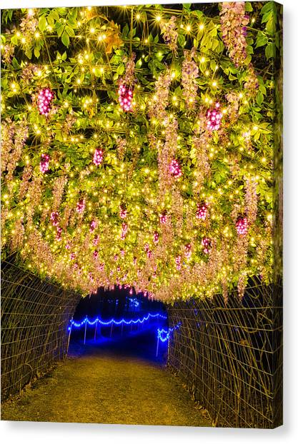 Vine Tunnel Canvas Print